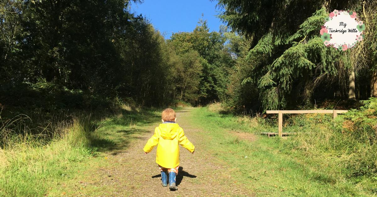 Hargate Forst Autumnal Walk