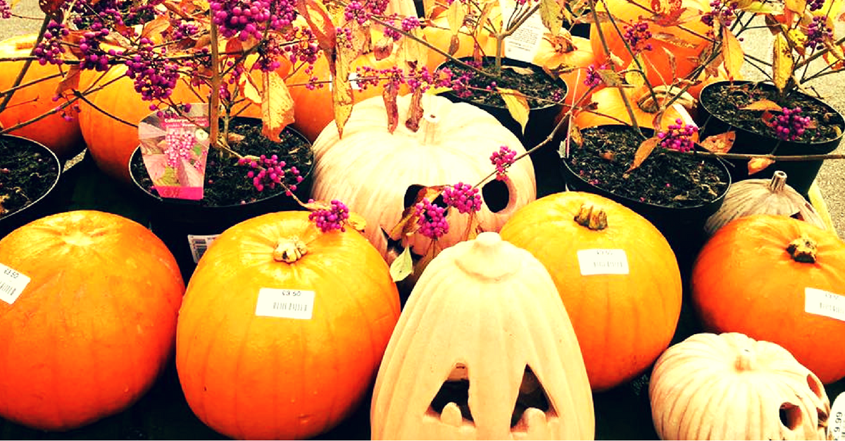Cake Decorations Tunbridge Wells : Book online now for Halloween & Christmas at Sussex ...