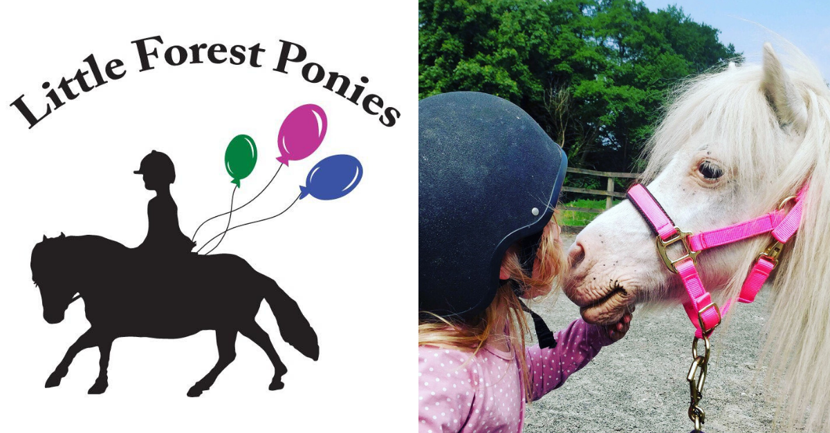 Winter Pony Fun Group Sessions with Little Forest Ponies