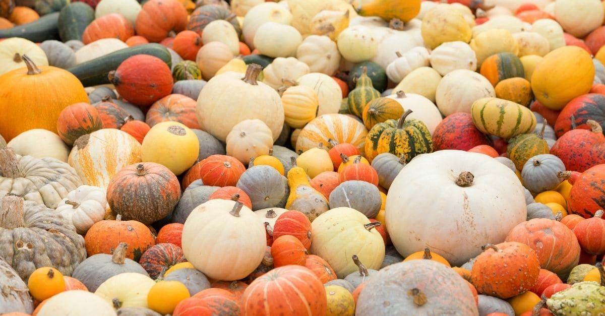 Pumpkins Kent