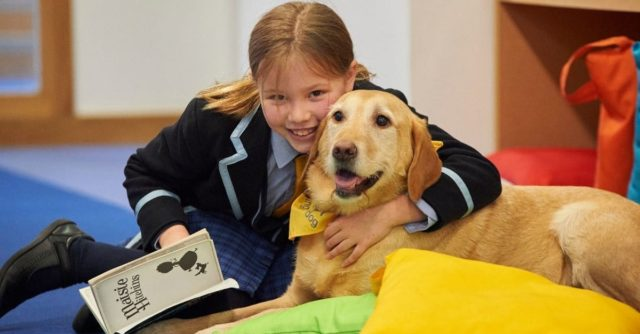 Holmewood House Pets as Therapy